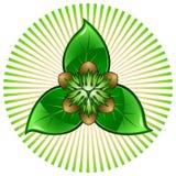 Sechs Muttern auf drei grünen Blättern Stockfotografie