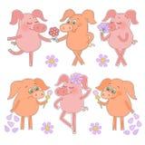 Sechs nette Karikaturferkelaufkleber glücklich und traurige Schweine mit einer Blume in einer Hand Lizenzfreies Stockbild