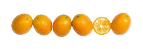 Sechs ovale japanische Orangen in Folge auf weißem Hintergrund Lizenzfreies Stockbild