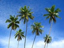 Sechs Palmen Lizenzfreies Stockbild