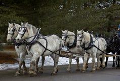 Sechs Pferden-Team Stockfotos