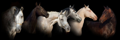 Sechs Pferdeportraitfahne Stockfoto
