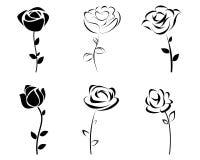 Sechs Rosenschattenbild Stockfoto