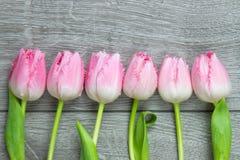 Sechs Tulpen auf einer Reihe Stockfotografie