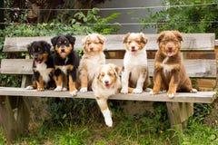 Sechs Welpenhunde im Porträt lizenzfreie stockbilder