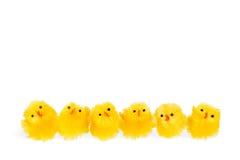 Sechs wenige Ostern-Hühner auf einer Reihe Stockbilder