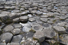 Sechseckige Basaltsäulen an der Damm des Riesen in Irland Lizenzfreies Stockfoto
