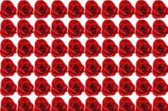 Sechzig Rose-Hintergrund Stockfoto