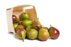 Seckel Pears from Basket. Fresh Seckel Pears spilling from a wood pint box Royalty Free Stock Photography