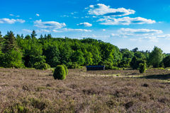 Secluded barn in the heath of the `Lüneburger Heide` royalty free stock image