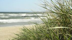 Secluded beach on the Baltic Sea stock video