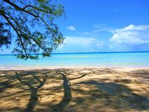 Secluded beach in the shade with welcoming bahama water. Secluded beach next to pine tree with beautiful Bahama water Stock Photography