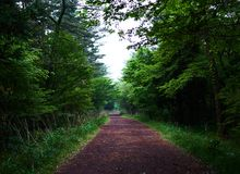 A secluded pathway in Saryuni Forest with trees lined up at both sides of the dirt path, Jeju Island, South Korea. A secluded pathway in Saryuni Forest with Stock Images