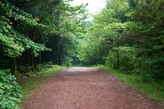 A secluded pathway in Saryuni Forest with trees lined up at both sides of the dirt path, Jeju Island, South Korea. A secluded pathway in Saryuni Forest with stock image