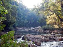 A secluded river in the jungle royalty free stock photos