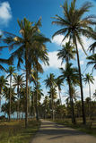 Secluded road among coconut trees Stock Photos