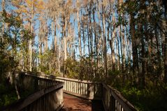 Boardwalk thru pines stock photography