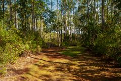 Secluded Trail Walk royalty free stock images
