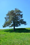 Secluded tree Stock Photo