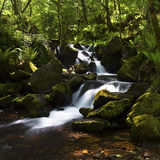 Secluded Waterfall. A secluded waterfall hidden on Exmoor Royalty Free Stock Photography