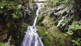 Secluded waterfall in tropical rainforest. Fiorland National Park, New Zealand.  stock video