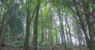 Secluded wooded area Stock Photo