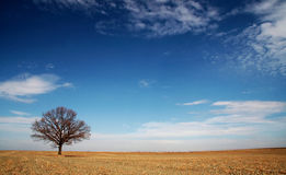 Seclusion. The only tree in the middle of the field with lovely clouds Stock Photography