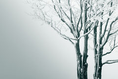 Seclusion tree Royalty Free Stock Images
