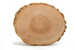 Secção transversal do tronco de árvore que mostra anéis de crescimento Foto de Stock Royalty Free