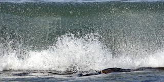 1/1250 second in the life of a wave. Wave rolling towards shore appears as a wall of glassy looking water royalty free stock photo