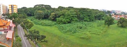 Secondary rainforest, Singapore Stock Photos