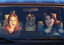 Seconds Before the Car Crash. Two women and a dog screaming in a vehicle Stock Photo