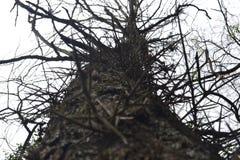 2 secou a árvore com espinhos e ramos secos com o céu no fundo imagens de stock