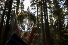 Secoya Forest Captured en la reflexión de la bola de cristal llevada a cabo en Fingert fotografía de archivo libre de regalías
