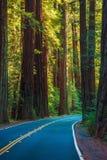Secoya Forest Highway Foto de archivo