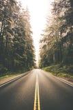 Secoya Forest Road Trip Fotografía de archivo libre de regalías