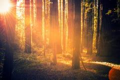 Secoya Forest Scenery imagen de archivo libre de regalías