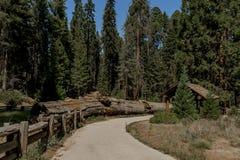 Secoya Park Imágenes de archivo libres de regalías