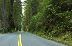 Secoya profunda Forest Road Foto de archivo libre de regalías