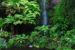 Secret bush in Eden Garden royalty free stock image
