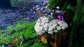The secret forest. Cute coffer with beautiful flowers Stock Photos