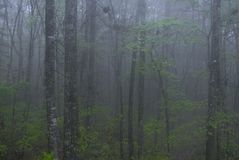 The secret forest stock photos