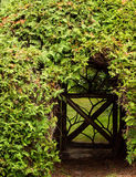 The secret garden. A gate leads to a secret garden that is surrounded by overgrow hedge Stock Photo