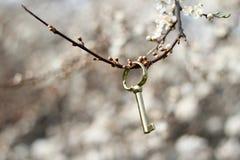 Secret garden. Golden key on a blossom twig Royalty Free Stock Photo