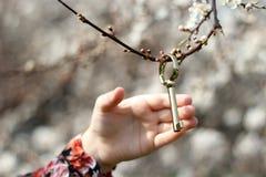 Secret garden. Golden key on a blossom twig Stock Image