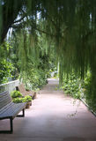 Secret garden path. A willow tree hangs above garden benches along a shady path. It is a perfect place to rest and meditate about nature in peace royalty free stock photography