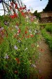 Secret Gardens. Colourful Flower gardens Stock Photography
