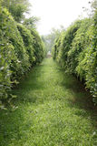 Secret green low tree lane. A view of silent green low tree lane Royalty Free Stock Photo
