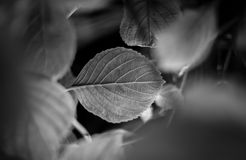 Secret leaf Royalty Free Stock Photography