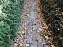 Secret path to the garden of stones and leaves stock photo